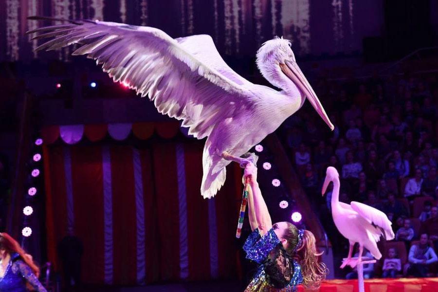Цирк Филатовых